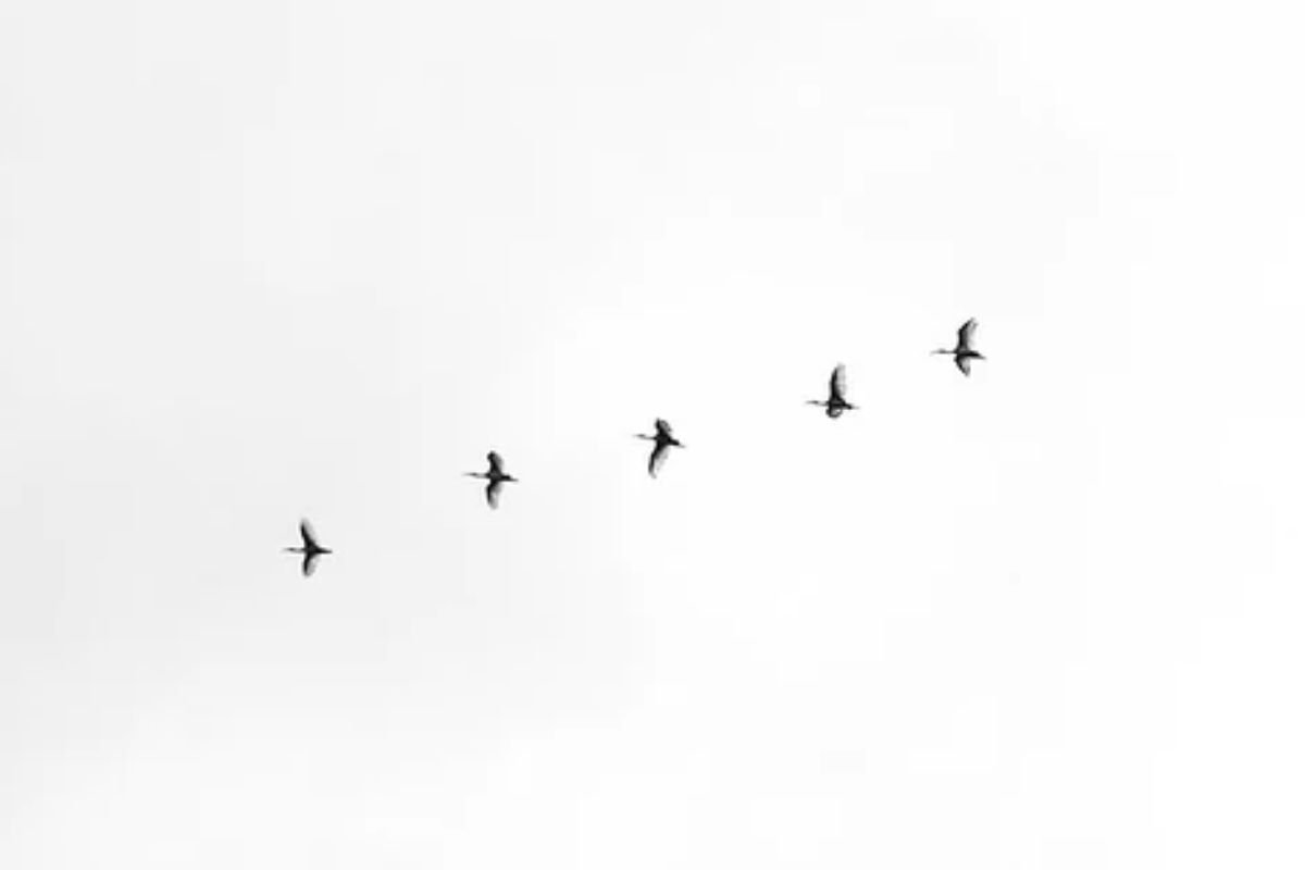 A group of birds flying